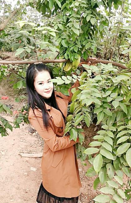 杏花雨照片
