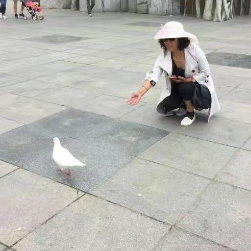 青青草地照片